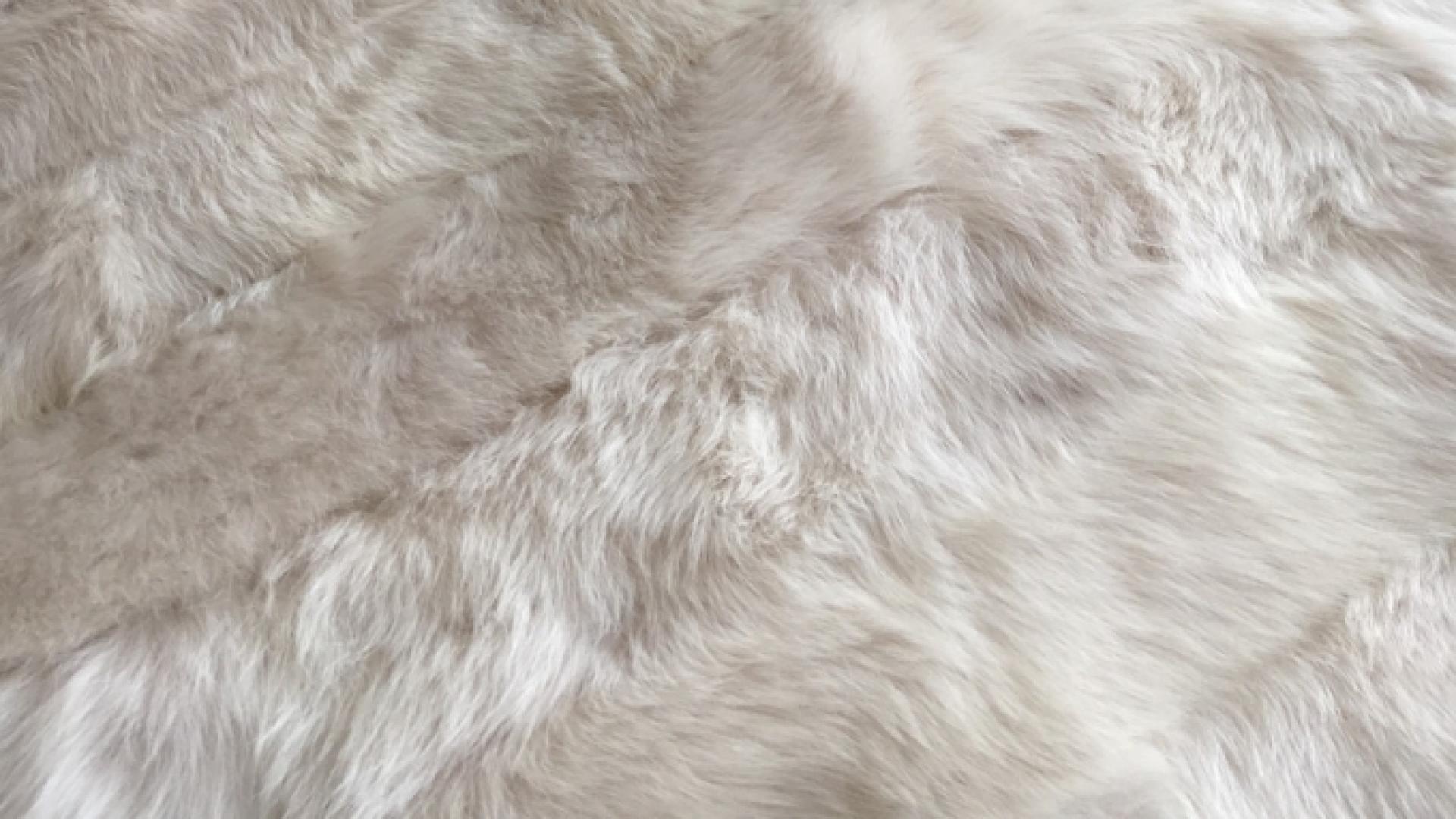 Sheep-White.jpg